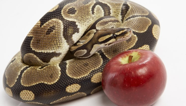 Serpents appear in many biblical passages, and represent several ideas.
