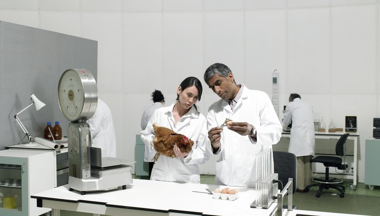 Scientists in laboratory with chicken