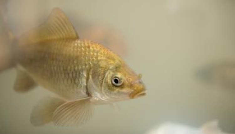 How to Remove White Buildup in an Aquarium | Animals - mom me