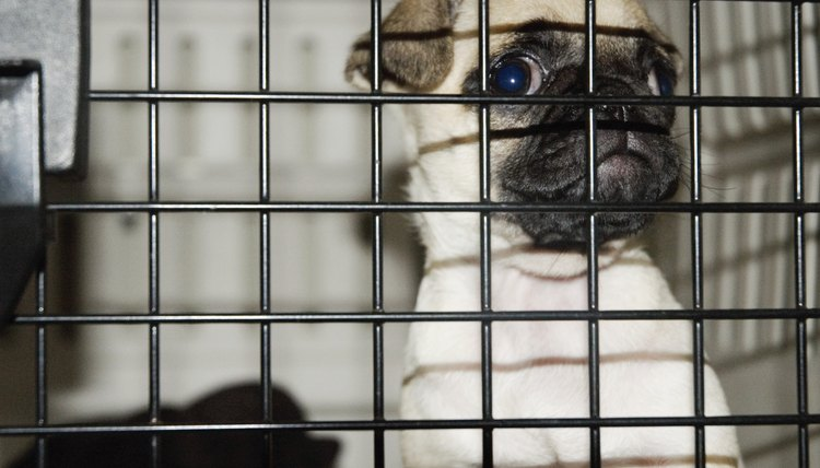 Puppy in a cage, close-up