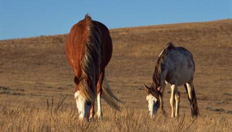 States That Have Wild Horses | Animals - mom me