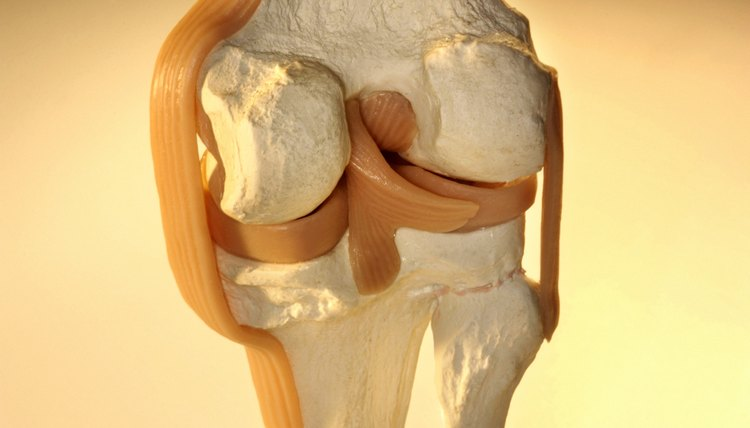 Cross-section of model knee