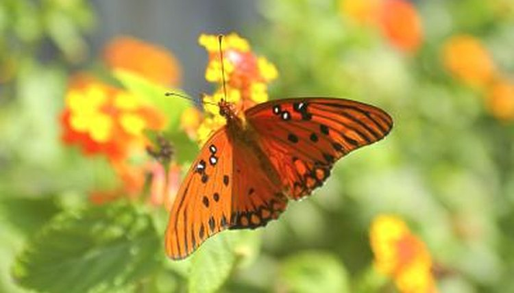The Mutualism Relationships Of The Butterfly Animals Mom