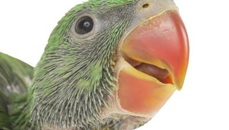 Why are Parrots' Beaks Different Colors? | Animals - mom me
