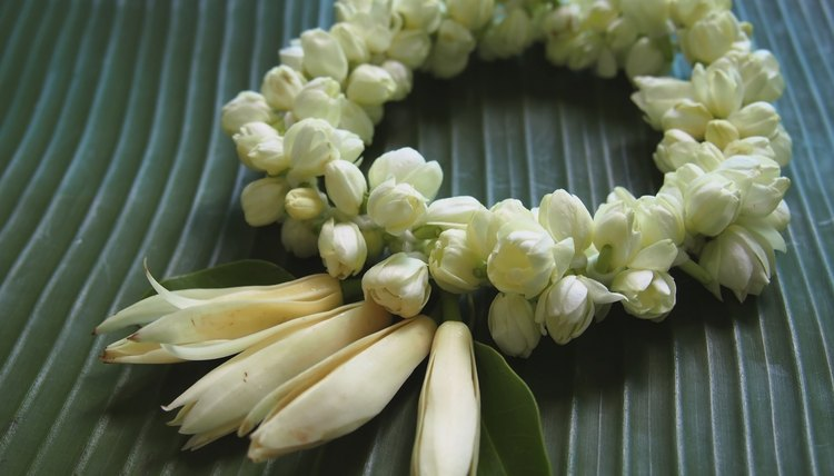 A Jasmine flower garland on a banana leaf.