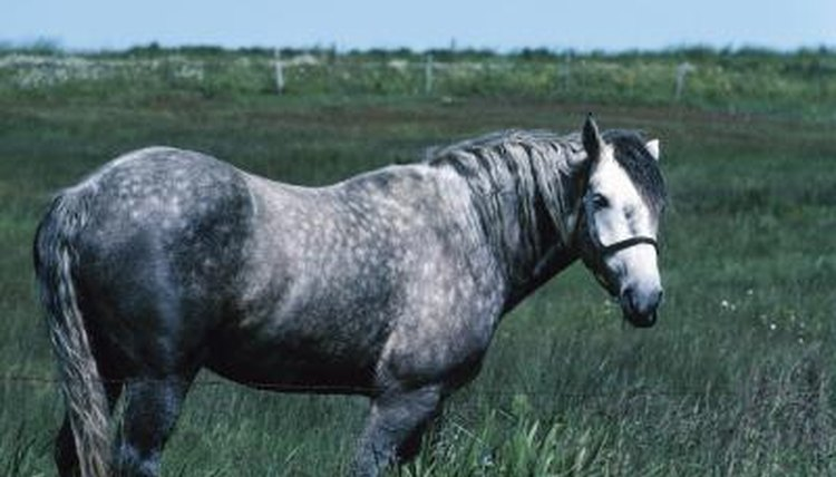 what causes dappling in horses coats animals mom me