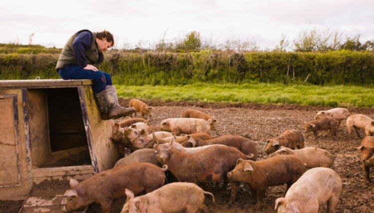 List of Agriculture Careers & Their Salaries | Career Trend