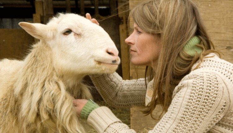 Why Are My Sheep Coughing? | Animals - mom me