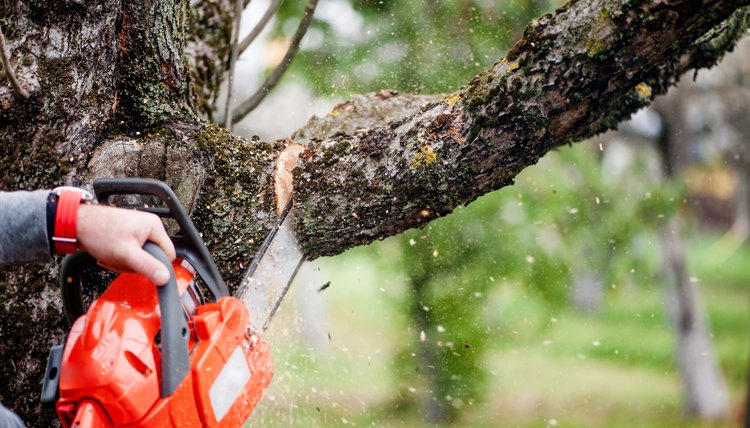 Man cutting tree limb using a chainsaw