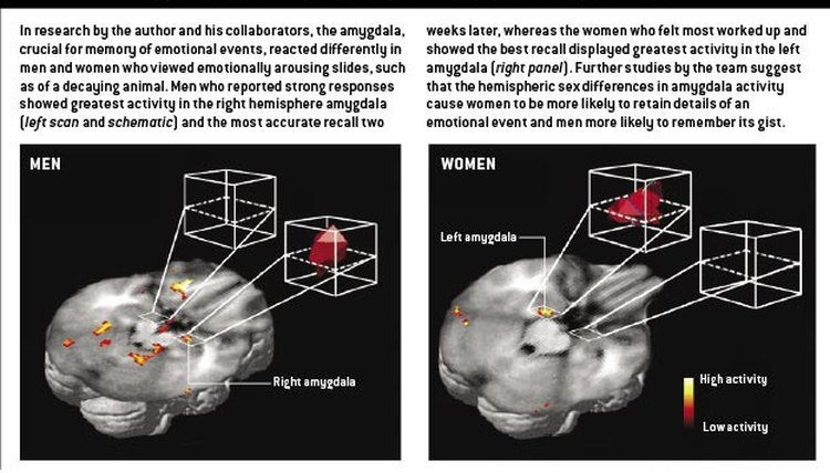 Gray and white matter differ by gender