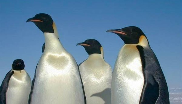 About Madagascar Penguins
