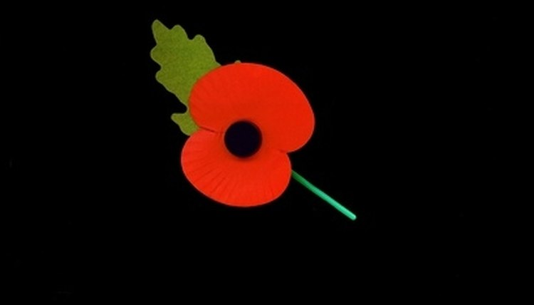 The poppy is the symbol of Remembrance Day.