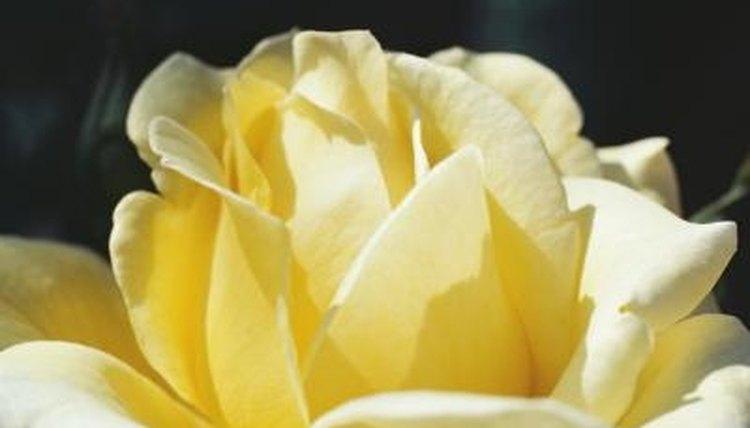 Sentences bloom like a beautiful flower.