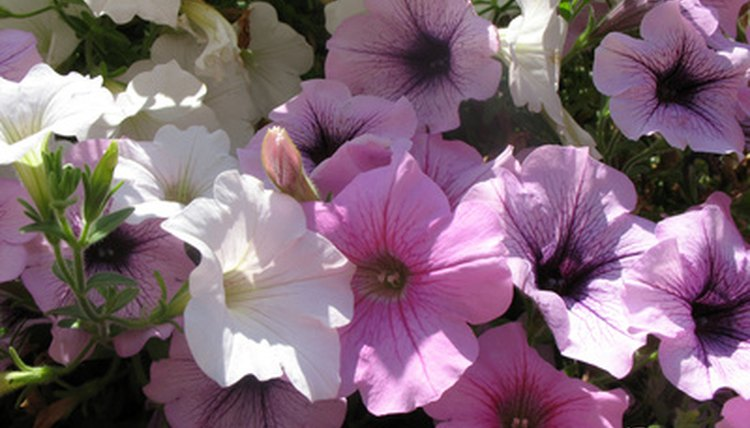 Flowers are often used to manufacture fragrances.