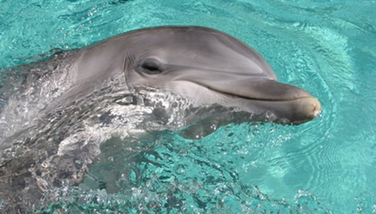Dolphin Image By Tabitha Little From Fotolia.com