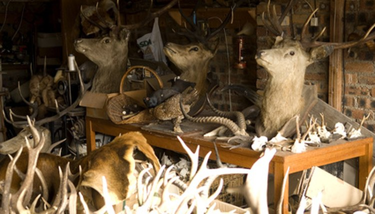 In Ohio, learn the art of taxidermy at local schools or online.