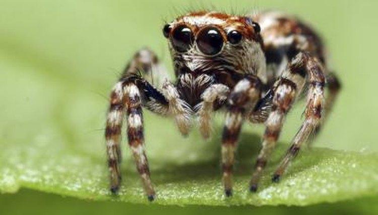 Common Encountered Spiders in Louisiana | Animals - mom.me