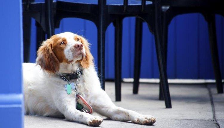 Dog on a restaurant patio