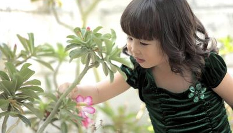 A girl observes the leaves on a green plant.