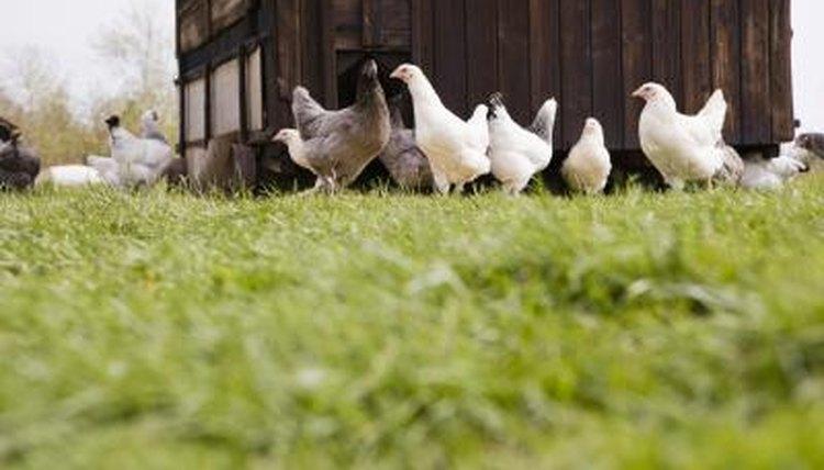 Visit a farm.