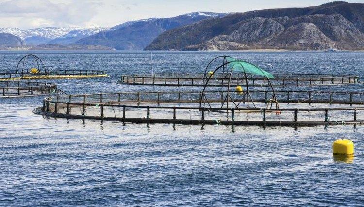 A fish farm in the ocean.
