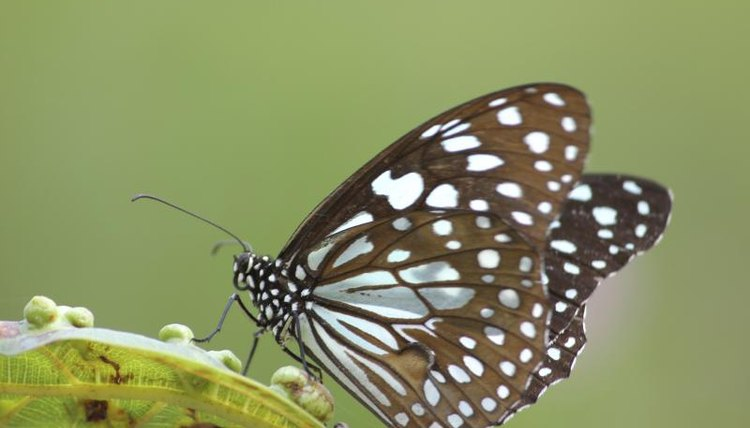 Butterfly on a leaf.