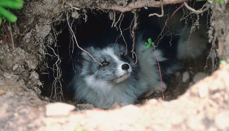 Dog Dens in the Wild | Animals - mom.me