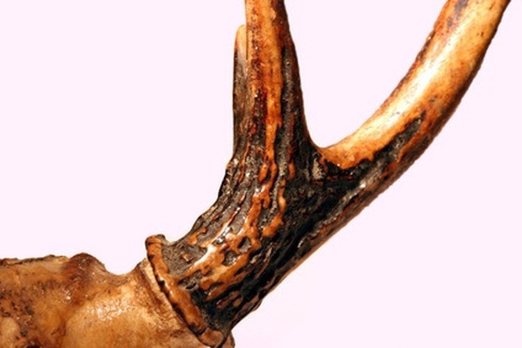 Deer antlers are made of bone tissue.