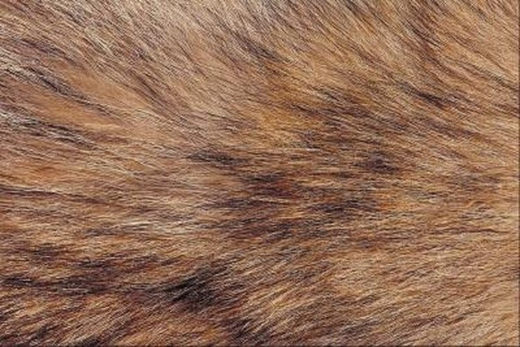 Coyotes have soft fur, ideal for clothing and rugs.