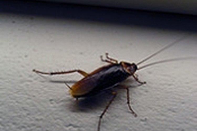 Repel Roaches