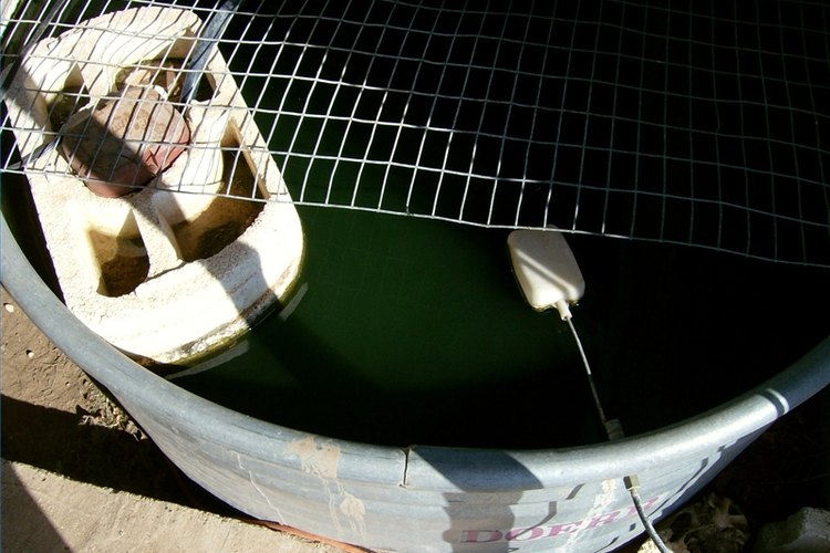 Bait minnows can be raised in tanks for personal use or profit.