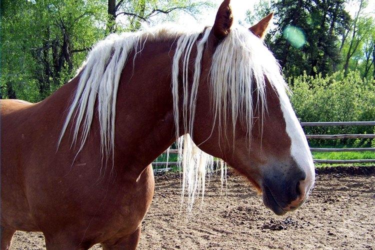 Ride Horses for Free (go Horseback Riding for Free)