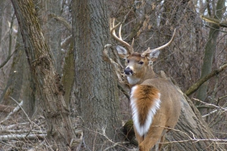 Deer blinds must be mobile to maximize effectiveness.