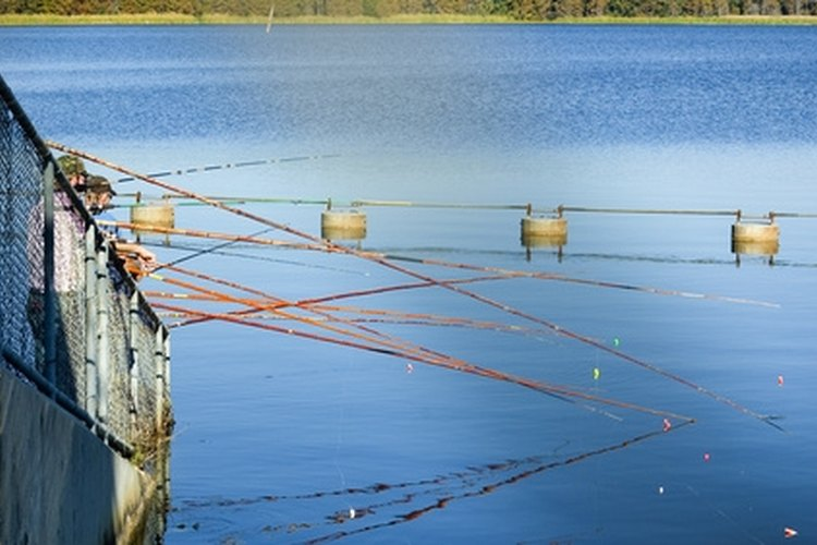 Cane poles are a good idea for beginning anglers.
