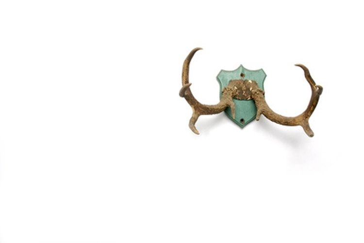 Restore symmetrical balance to antlers by repairing broken parts.