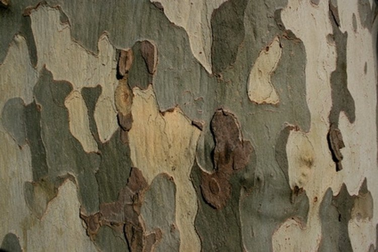 Mimic the colors of nature by combining various colors of paint manufactured specifically for camouflage applications.