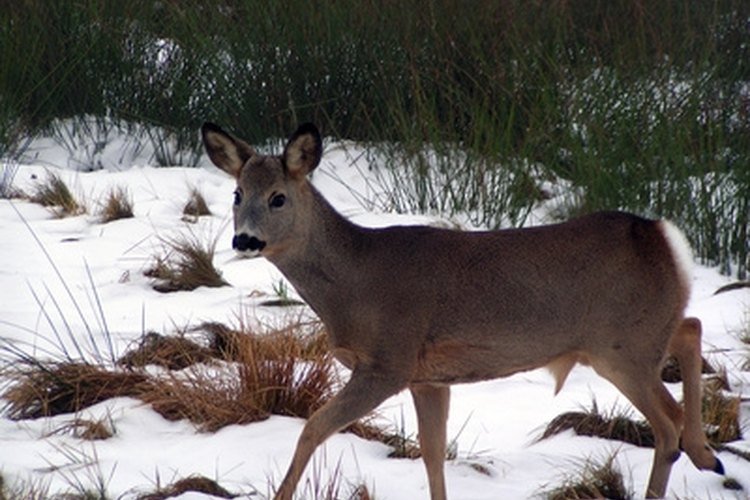 Distance is an important factor for hunters when they are stalking big game.