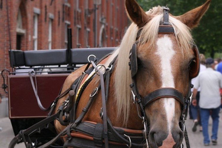 The single harness is a communication system between horse and driver.