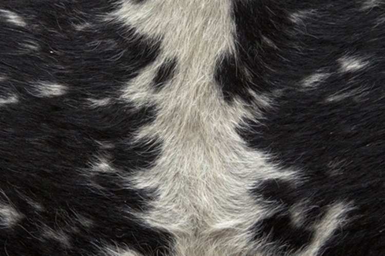 Animal hides can be tanned with the hair on to preserve a rustic look.