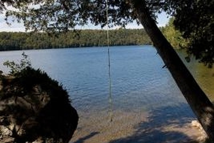Rope swings are a staple of fresh water swimming recreation.