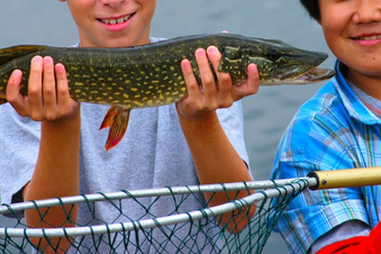 Young children enjoy their catch of a northern pike.