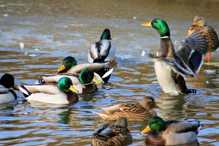 Building a permanent duck blind will save you hours of work.