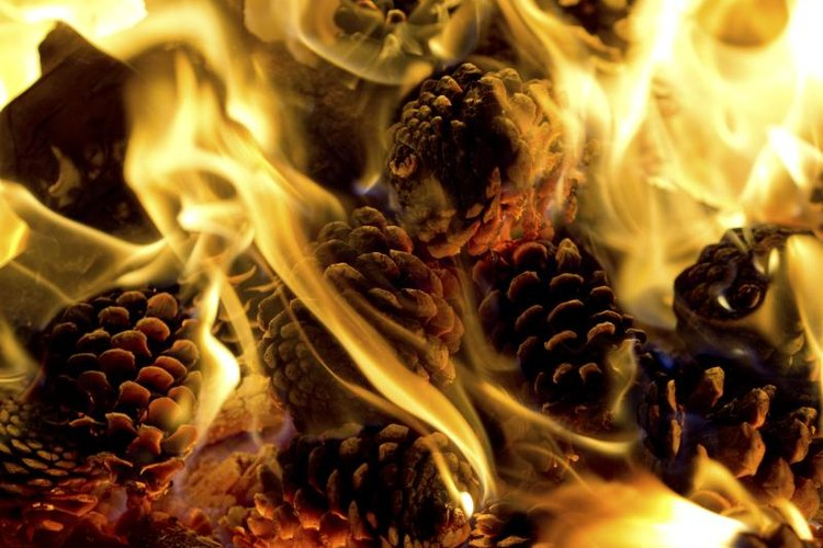 While pine cones burn without additives, candle wax makes it easier to light them.