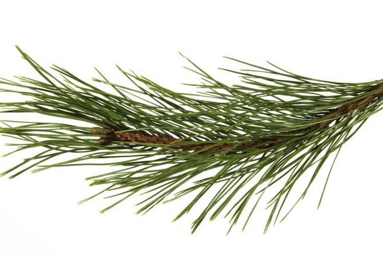 In a pinch, rub pine needles on your boots to cover your scent.