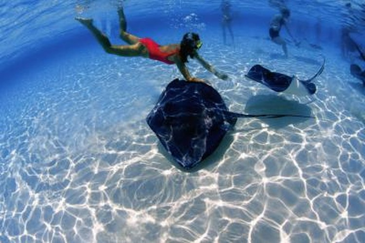 Snorkeling allows you to view the scenery underwater.