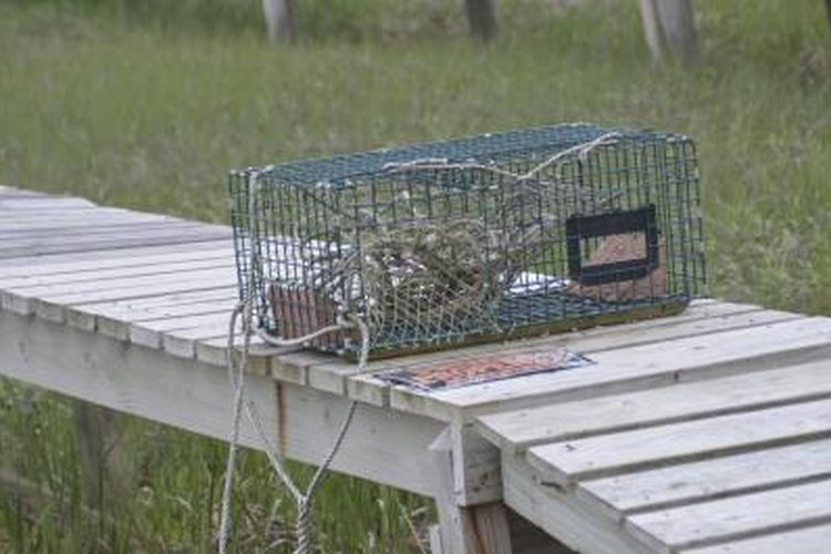 You can tie your crab trap to a dock, rather than a buoy, when working shallow waters.