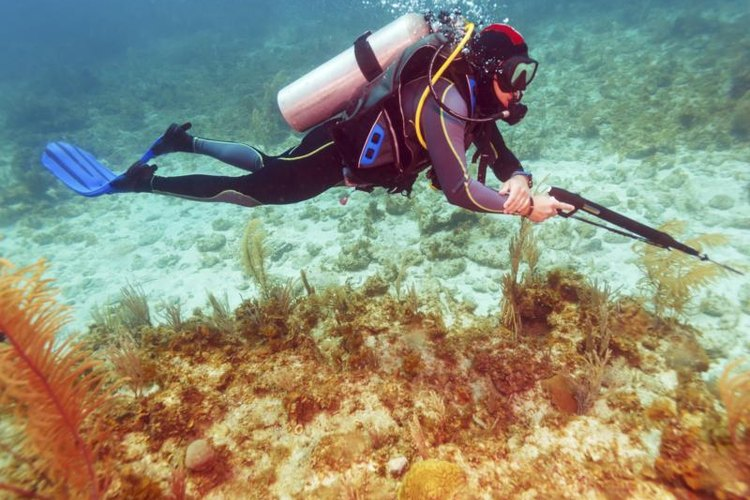Scuba diver with a spear gun underwater.