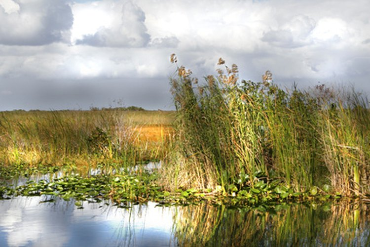 Scenic view of an everglades state park.