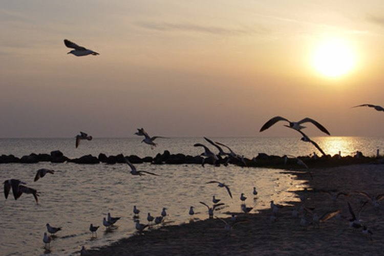 Gulf Shores, Alabama, offers scenic oceanfront camping.