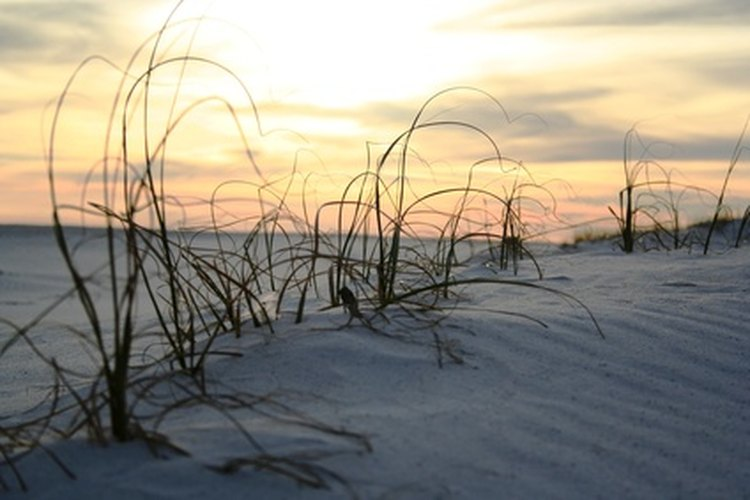 Scenic view of dunes at Jacksonville Beach.